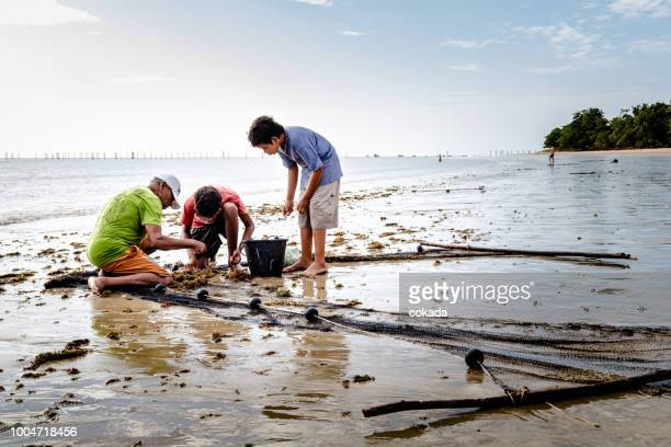 fishermen family catching shrimps from the net - daily bucket stock pictures, royalty-free photos & images
