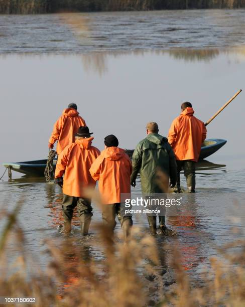 Fishermen fish a carp pond from the Mueritz-Plau fishery in the Muertiz National Park in Boek,Germany, 29 October 2015. The fishery, with 27,000...