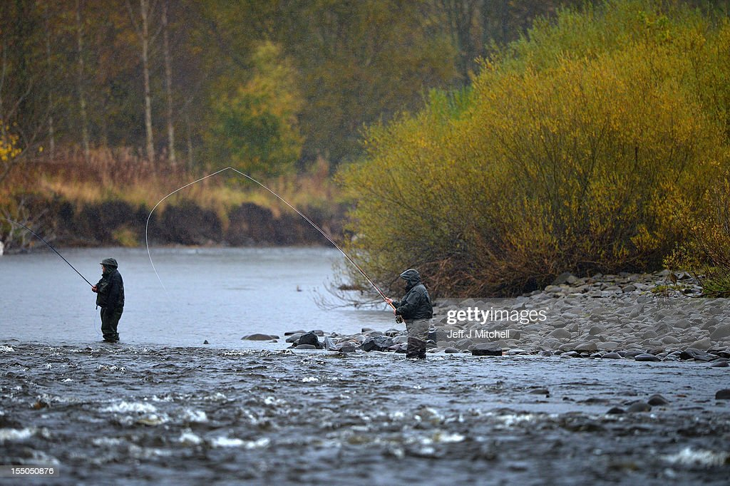 Fishermen fish for salmon on the Etterick river near to the fish ladder on October 31, 2012 in Selkirk, Scotland. Salmon are returning upstream from the sea where they have spent between two and four winters feeding with many covering huge distances to return to the fresh waters to spawn.