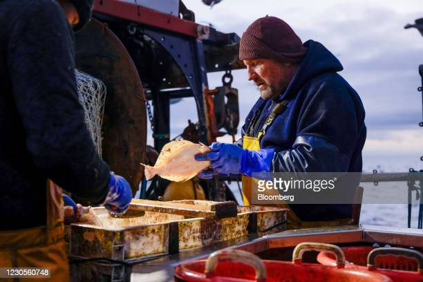 Fishermen gut freshly caught fish aboard fishing boat 'About Time' while trawling in the English Channel from the Port of Newhaven, East Sussex, U.K....