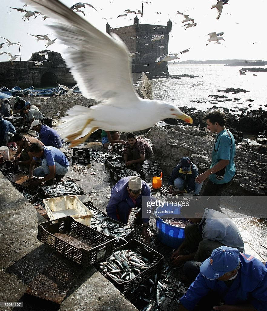 Fishermen Prepare and Sell the Daily Catch in Essaouira Port : News Photo