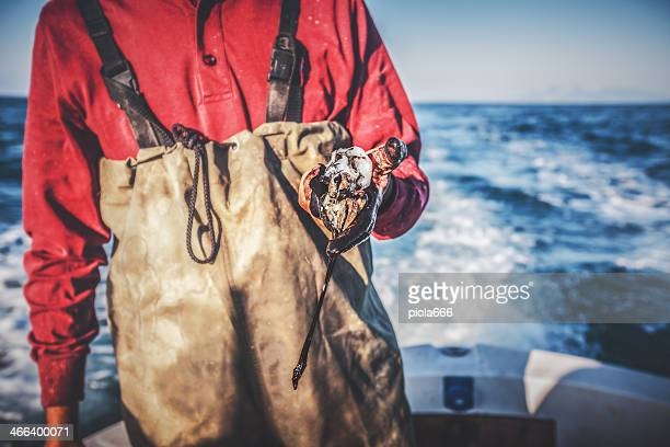 Fishermen hands black for squids