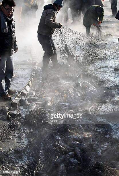 Fishermen haul in a large catch in net on the frozen Chagan Lake on December 27 2012 in Songyuan China Traditional winter fishing in the Chagan Lake...