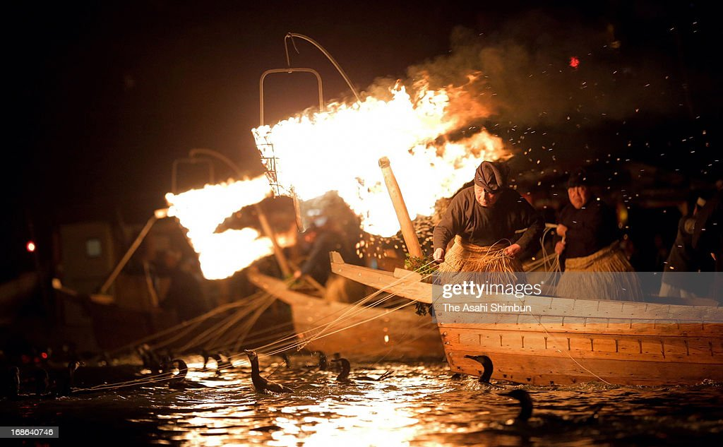 Fishermen, known as Cormorant Fishing Masters, use cormorant birds or 'U' during the practice of 'Ukai' or cormorant fishing during the fishing season which runs from May 11 to October 15, on the Nagara River May 11, 2013 in Gifu, Japan. The 1300 year old tradition sees fishermen use the fire lanterns to illuminate the river for the cormorants to catch their fish prey.