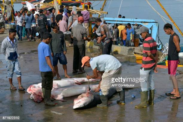 Fishermen look at tiger sharks in Banda Aceh seaport in Aceh province on November 9 2017 Indonesia's economy grew more slowly than expected in the...
