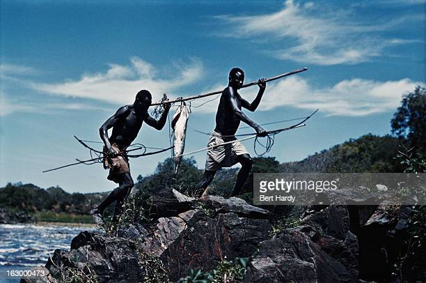 Fishermen of the Madi tribe carrying a Nile perch on a bamboo pole at the Fola Rapids on the White Nile, close to the Ugandan border near Nimule,...