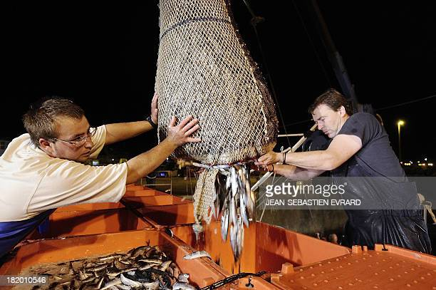 Fishermen of the net fishing boat 'Kanedevenn' unload their catch of sardines on September 24 2013 in Quiberon western France The sardines are for...