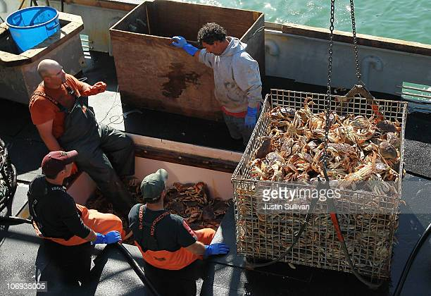 Fishermen offload Dungeness Crab from their fishing vessel on November 17 2010 in San Francisco California After a brief delay due to the sizes and...