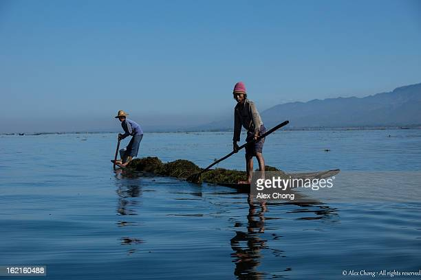 CONTENT] Fishermen on a long boat harvesting seaweed from the bed of Inle Lake These are some of the common activities along the lake which support...