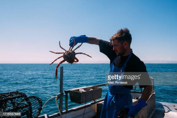 fishermen out at sea - crab stock pictures, royalty-free photos & images