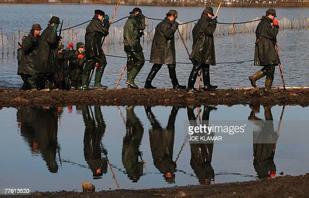 Fishermen pull nets during the traditional Carp haul in the lake of Dvoriste near the south Bohemian town of Trebonon 31 October 2007 Carp the...