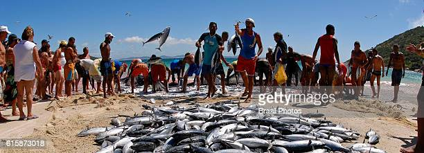 Fishermen put the daily production for sale at the beach for tourists and residents Arraial do cabo city Rio de Janeiro State Brazil