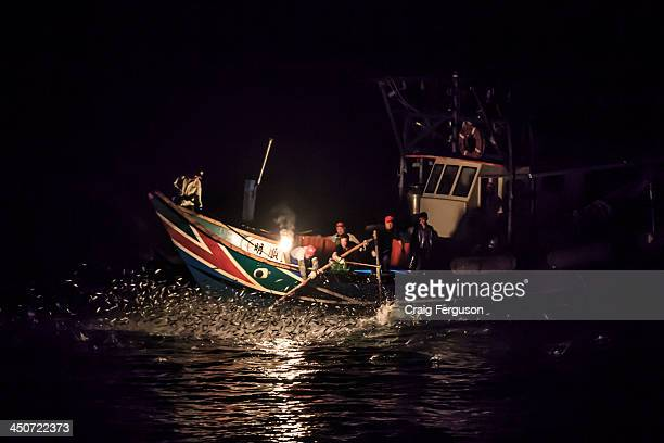 Fishermen reach over with nets to catch the leaping fish in the traditional art of fire fishing