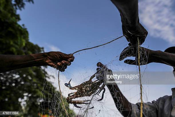 Fishermen remove a crab from a net near the Fort Kochi Chinese fishing nets in Cochin Kerala India on Friday May 29 2015 UBS Group AG says India has...