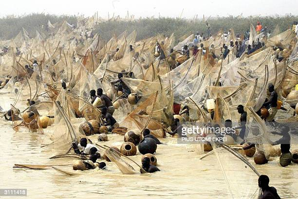 Fishermen rush to catch fish in the River Rima at the Argungu fishing festival 19 March 2004 in Kebbi State of northern Nigeria Thousands of...