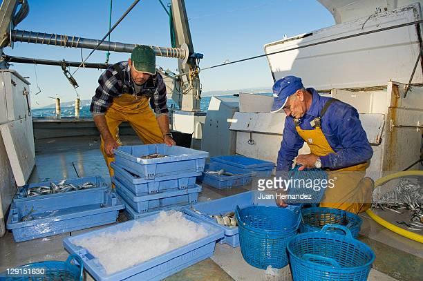 Fishermen selecting fish