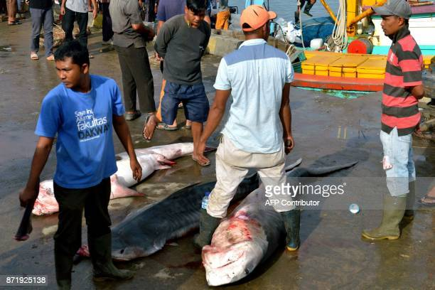 Fishermen stand over tiger sharks for sale at Banda Aceh seaport in Aceh province on November 9 2017 Indonesia's economy grew more slowly than...