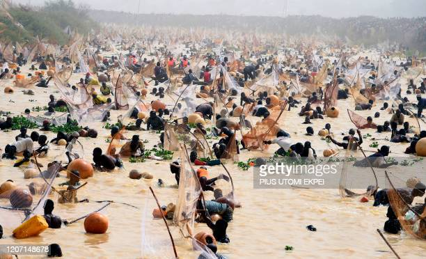 TOPSHOT Fishermen try to catch fishes during the final of the revived Argungu fishing and cultural festival at Argungu Town Kebbi State in northwest...