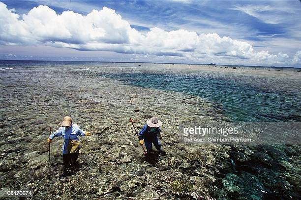 Fishermen try to catch fishes gathering around Yabiji coral reef on August 24 1999 in Miyako Okinawa Japan the coral reef appears on the sea level...