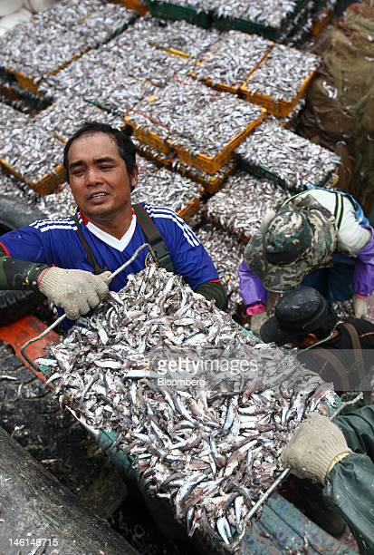 Fishermen unload a crate of anchovies from a fishing boat at Mijo port in Namhae South Korea on Friday June 8 2012 The peak season for anchovy...