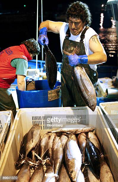 Fishermen unload their catch of white tuna fish from a boat in Bermeo near Bilbao in Spain on Wednesday July 1 2009 In September 2008 the European...