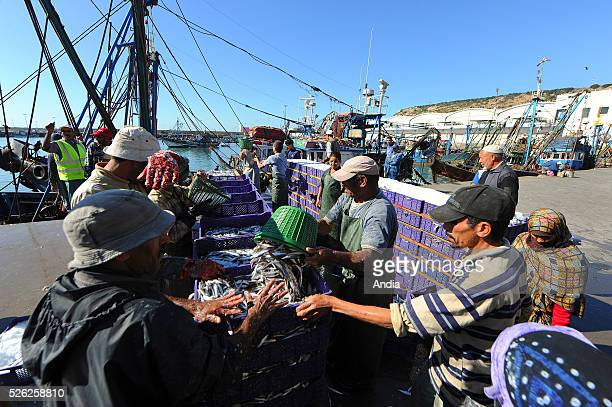 Fishermen unloading their catch from the trawlers alongside the quay in the fishing port of Agadir in Morocco Fishermen unloading fish