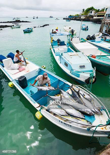 fishermen unloading tunafish at puerto ayora fish market - puerto ayora stock pictures, royalty-free photos & images