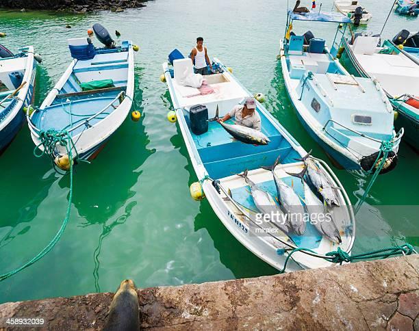 fishermen unloading tunafish at puerto ayora fish market - yellowfin tuna stock photos and pictures