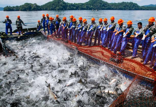 CHN: Fish Harvest In Qiandao Lake