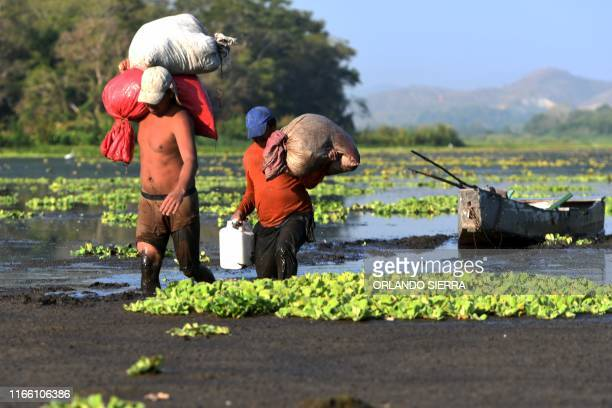 Fishermen walk out of the Jucutuma Lake in San Pedro Sula Honduras on September 1 2019 Honduras declared a state of emergency on September 5 due to...