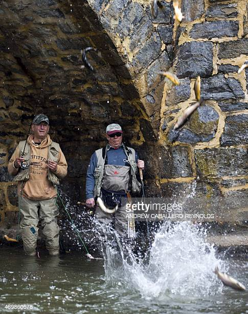 Fishermen watch as trout released from a bridge fall into a river near Hagerstown Maryland on April 15 2015 By the start of summer the Maryland...