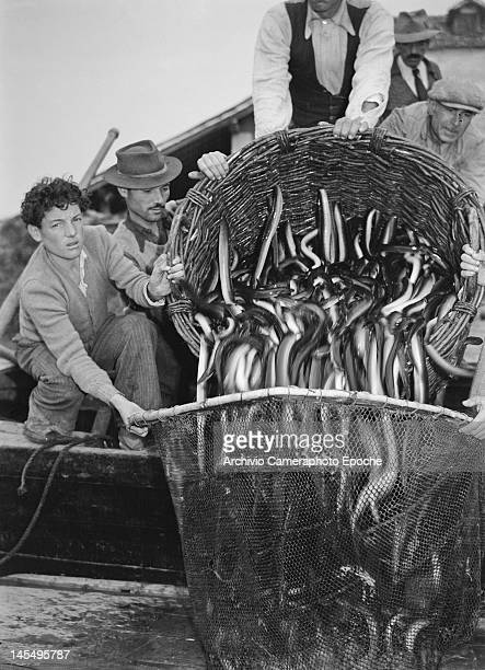 Fishermen with a basket of eels in the valley Italy 1946