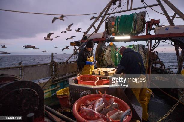 Fishermen work to sort fish including gurnard, front, from the boat 'About Time' in the English Channel from the Port of Newhaven in Newhaven, U.K....