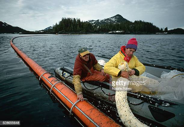 Fishers place the sorbent boom used to control oil leakage in the water in Sawmill Bay Alaska USA following the Exxon Valdez oil spill 1989
