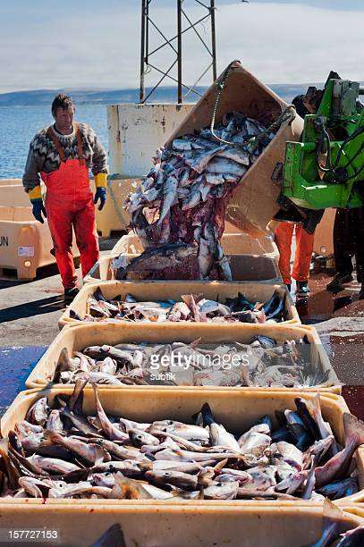 fishery on iceland - atlantic ocean stock pictures, royalty-free photos & images