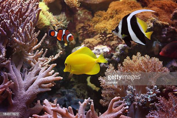 Fishes and corals in the sea