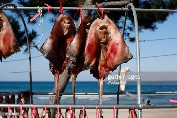 Fishes are hanged for drying in the street at Namai port in Yangyang Ganwon province in South Korea on February 1 2018 The North Korean athletes...