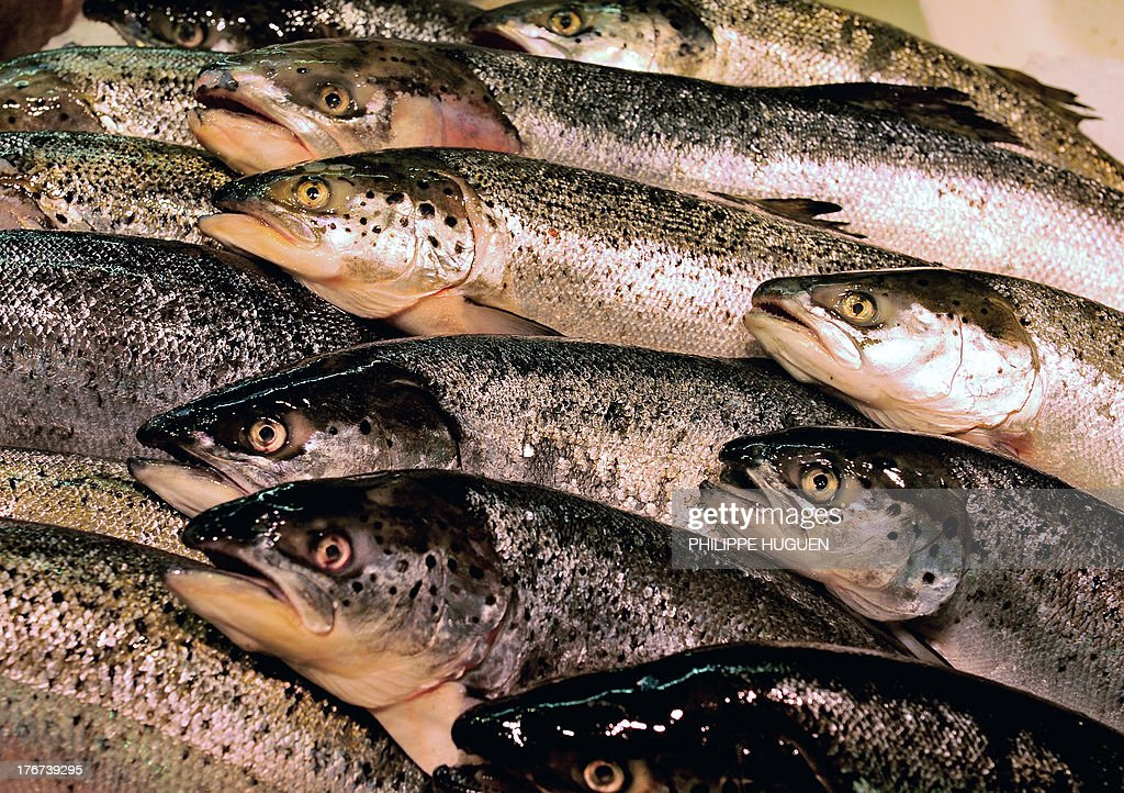 Fishes are on display on the stall of a fishmonger, on August 18, 2013 in Lille, northern France.