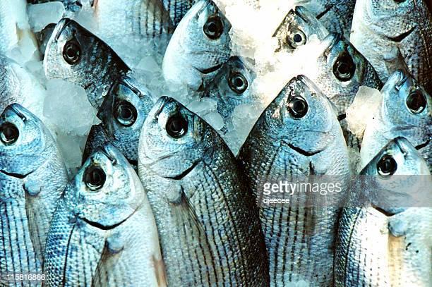 Peixes navios#2