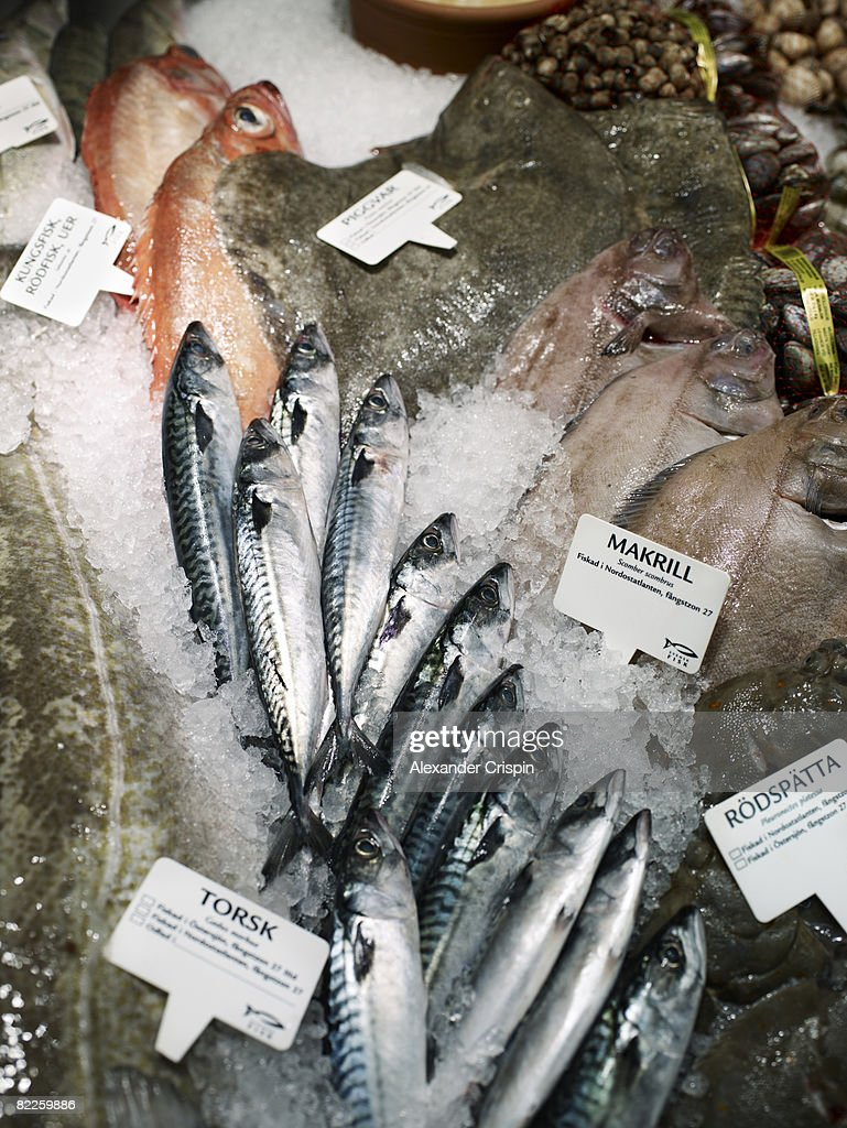 Fishes for sale. : Stock Photo