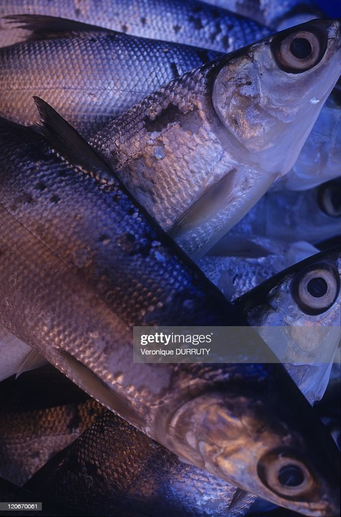 Fishes In Rantepao Market In Toraja Land, Sulawesi, Indonesia - : News Photo