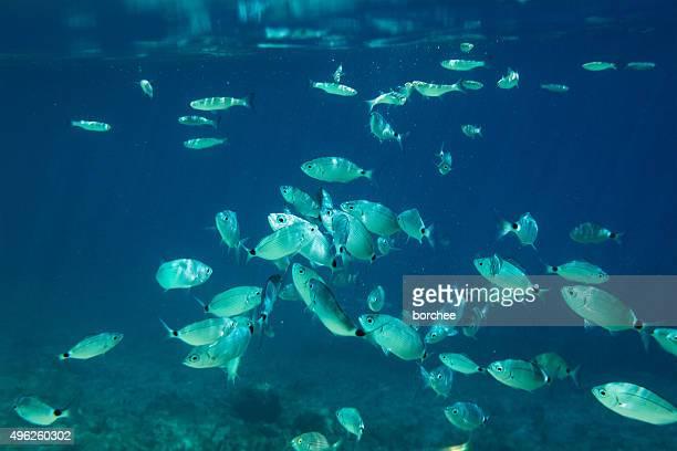 pesci di mare - gruppo di animali foto e immagini stock