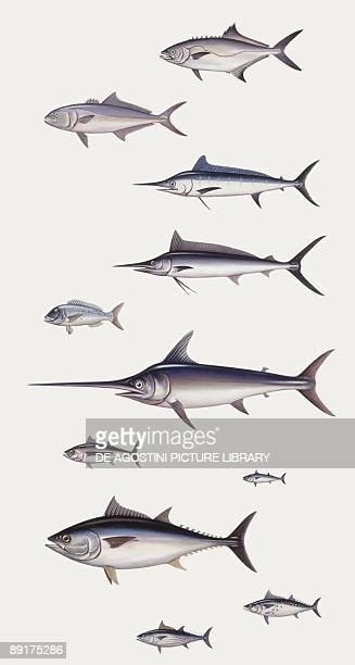 Fishes Perciformi Recreational fishing andsport fishing fishes different examples illustration