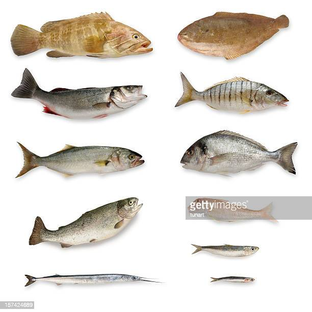 fishes - grouper stock pictures, royalty-free photos & images