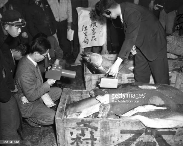 Fishes stored in the fridge of Dai 5 Fukuryu Maru are checked the radiation levels at Tsukiji Fish Market on March 16 1954 in Tokyo Japan All 23 crew...