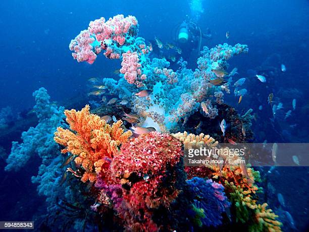 fishes swimming by coral reef undersea - reef stock pictures, royalty-free photos & images