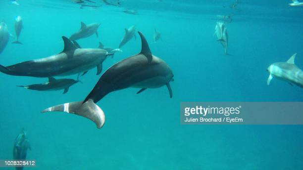 fishes swimming in sea - aquatic mammal stock pictures, royalty-free photos & images