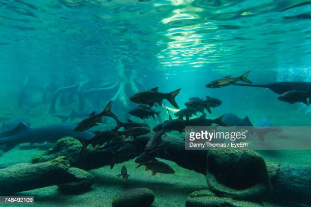 Fishes Swimming Over Log Undersea