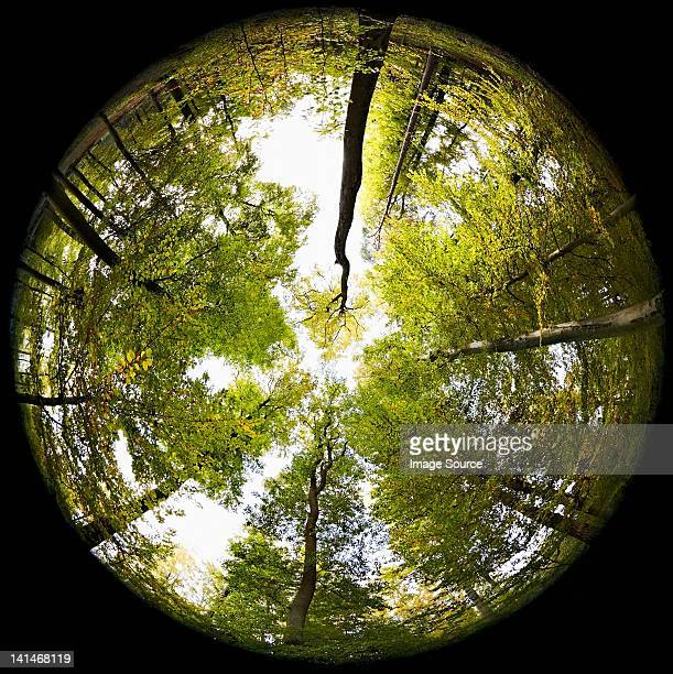 Fisheye perspective of trees in forest