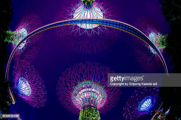 Fisheye photography of super trees inside the Garden by the Bay during twilight time